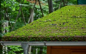 Moss and fungus growth
