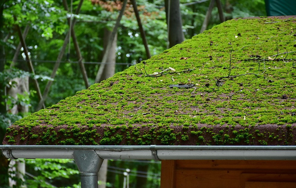 Summer Roofing Issues: Moss & Fungus Growth